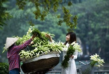 Ao Dai Viet Nam / by Bradley Tran