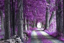 Purple Beauty / by Erin Primofiore