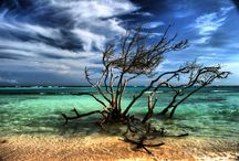 Aruba! Are we going?!?! Yes we are...it's booked!  / by Wendy Kittyle