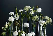 Flowers&Leaves / by Tamsin M
