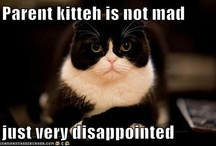 Cats = LOL / by Emily Perez
