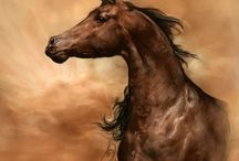 Horses / by Nancy Gallagher