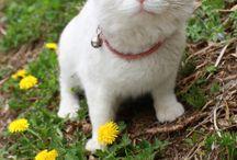 Crazy Cat Lady / by Julia Morey