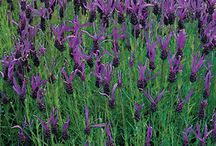 Herbs / by NationalGardenBureau