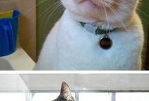 Cats  / by Tamara King