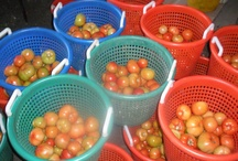 Tomatoes / by Emily's Produce