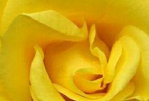 Yellow / by Paula R Bailey