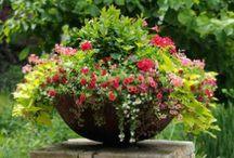 Gardens - Gardening / by Brianna Lawrence
