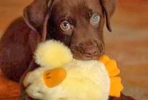 I'm getting a pup! / by Deanna Snyder