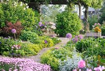 Gardening / my dream gardens / by helen mckague
