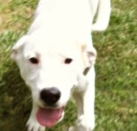 adoptable pets / by Lisa Overton Robinson