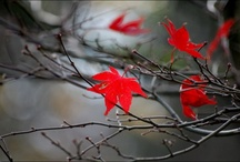 autumn  / by Cindy Arnold