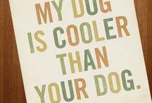 Dogs / by Betsy Barnacascel