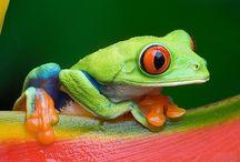 Colorful amphibians & reptiles / by Marguerite Thompson