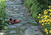 Pathways / by Ann Latimer