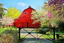 Beautiful Barns / by Jenny S
