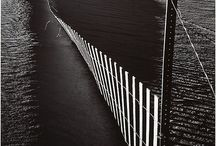 Absel Adams / by Dawn Fondren