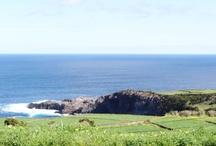 Madeira (Isla de Terceira): 1 semana de vacaciones 309€ / 8 días y 7 noches con 7 desayunos en el Hotel Angra Garden 3* o similar + vuelos desde Madrid + (incluye tasas y traslados). ¡No esperes más y reserva ya tus vacaciones en esta magnífica isla! Salidas disponibles: 3, 10 y 17 de julio! / by Busco Un Chollo