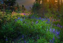 Washington State / by Bob Fischer