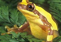 Amphibians, I hope / by Diana Hensley
