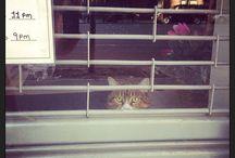 NYC CATS / by Tamar Arslanian