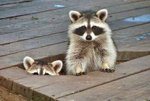 Raccoons & Otters / by Caprice Leachman