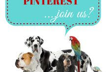 Pinterest / All thinks to do with this great social media site, Pinterest / by Social Progress