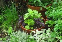 Gardening...... / by Anita Campo