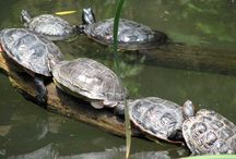 Turtles / by Hotchpotch Ehh