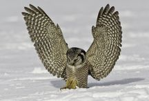 Animale that fly... / by Mundo Garcia