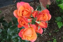 Stop & Smell the Roses / by La Jolla Cosmetic Surgery