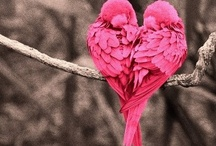 Lovebirds / Lovebirds Melkweg decor inspiratie / by Tineke Timmerman