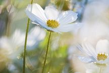 Wedding - Daisy / by Jacqueline Taylor Griffin