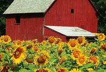 Barns,country roads,old stuff,etc / by Vada Wetzel