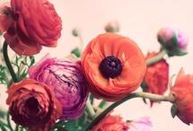 Ho fleurs de ma vie! / Comme j'ai besoin de couleurs, j'ai besoin de fleurs! / by Melanie Belisle Maquilleuse