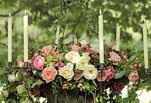 Garden / by Anita ~ The Reed Warbler