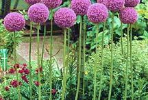 Gardens / by Kate Kostenbader