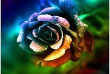 pretty flowers / by shanna smith