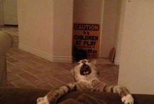 haha! / by Sadie Salmons