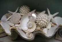 She loves Sea Shells / Sea Shells / by Wanda