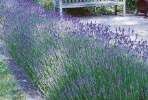 "garden ideas / by Jo-Anne ""MrsMontreal"""