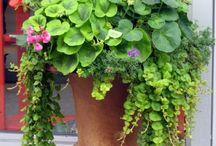 companion planting / by Sunnyside Nursery