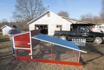 Backyard Chickens / by farm carolina