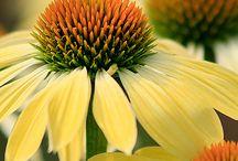 Flowers 2 / by Lori Arnett