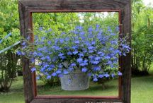 Gardening / by Doreen Squires