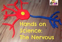 Brain Day / Library Lessons for Homeschoolers / by Sue Pekel