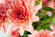 Blooms / by Sara Mackenzie