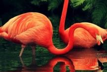 flamingo love / by Sara McKinlay