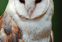 owls...love them! / by Sirena Green