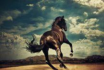 Horses / by Joséphine Delègue